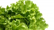 Lettuce-Leaves-Plant-Vegetable-On-White